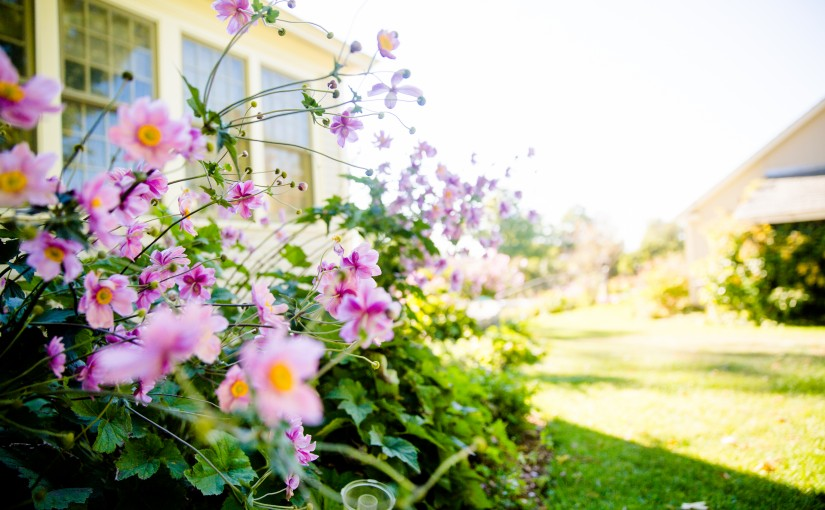 Avoid summer issues in your property